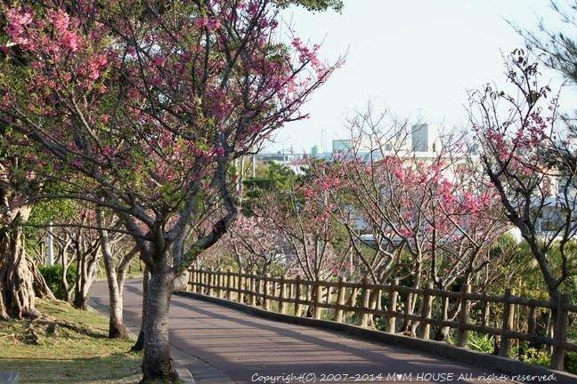 葉桜並木とさくらんぼ *今日のbento ☆ つまみ御膳♪_c0139375_12142214.jpg