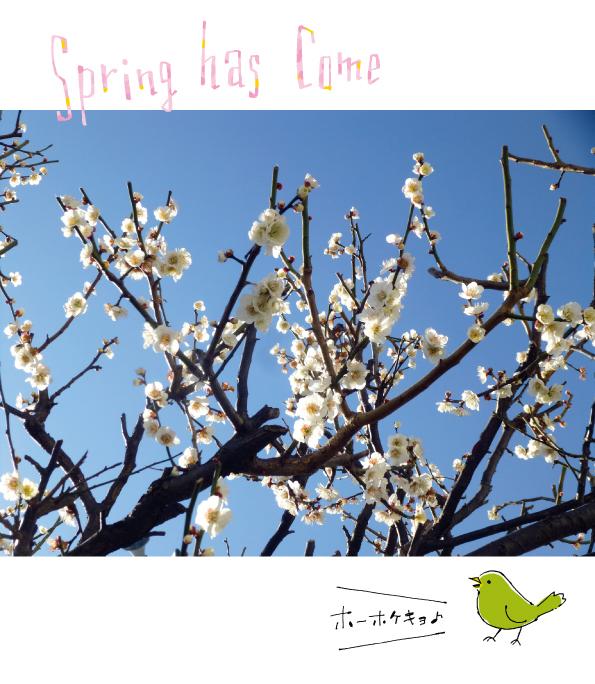 梅の花_d0272182_21123964.jpg