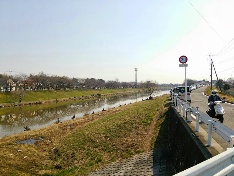 2014年3月17日 カワラヒワ/河原鶸/Oriental Greenfinch_f0108797_16011528.jpg