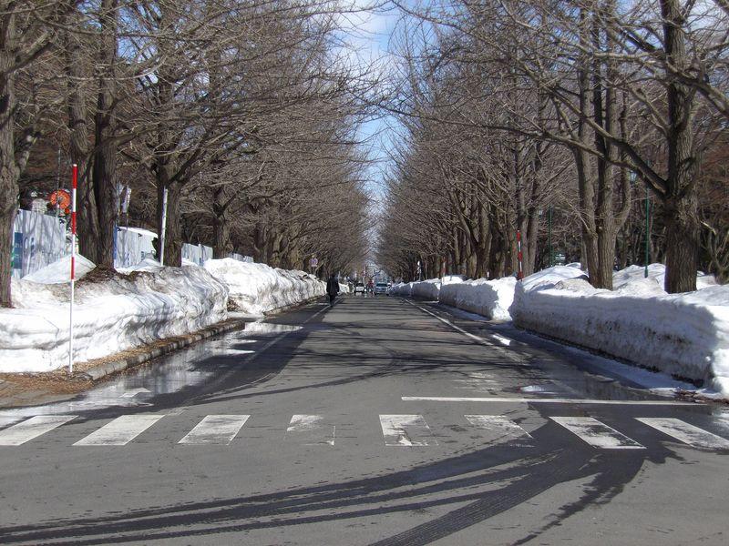 冬を抜けた札幌_c0025115_18194886.jpg