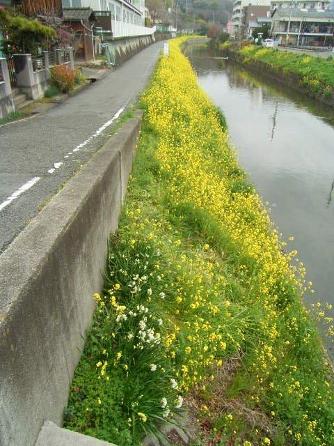 松山散歩_b0206421_1511624.jpg