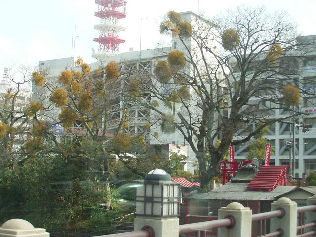 松山散歩_b0206421_15122169.jpg