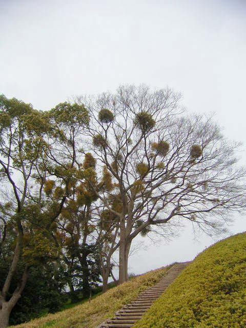松山散歩_b0206421_1526337.jpg
