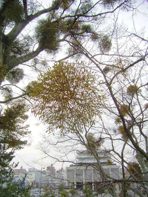 松山散歩_b0206421_15265924.jpg