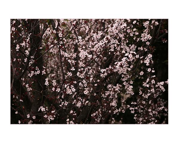 桜かな_a0097735_22473581.jpg