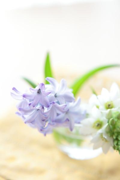 切り花を長い間、楽しみましょう。_a0227137_2245881.jpg