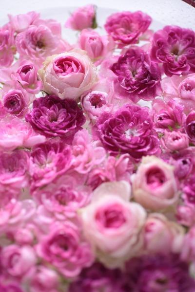 切り花を長い間、楽しみましょう。_a0227137_22534231.jpg