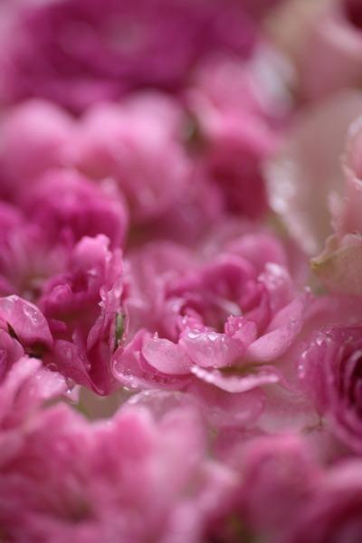 切り花を長い間、楽しみましょう。_a0227137_22545357.jpg