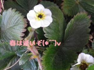 b0239151_12233843.jpg
