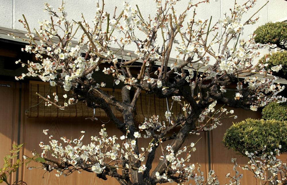 春の便り_b0093754_16425234.jpg