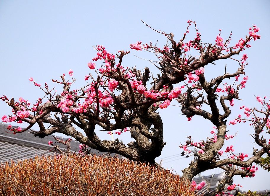 春の便り_b0093754_1644164.jpg