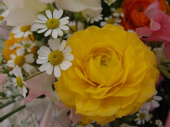 春よ来い♪_f0158364_14045819.jpg