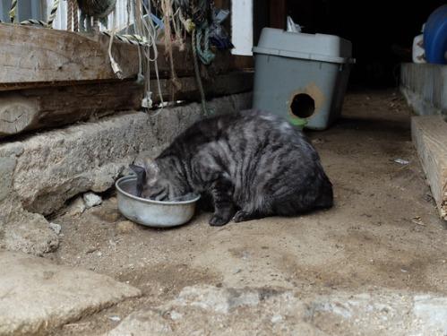 猫日和 1:はじめまして_a0180681_17144895.jpg