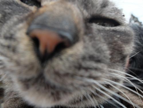 猫日和 1:はじめまして_a0180681_2574618.jpg