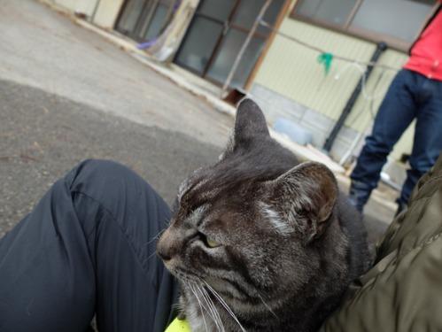 猫日和 1:はじめまして_a0180681_2594077.jpg