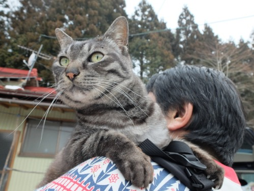 猫日和 1:はじめまして_a0180681_301053.jpg