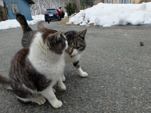 猫日和 2:少しずつ_a0180681_304330.jpg