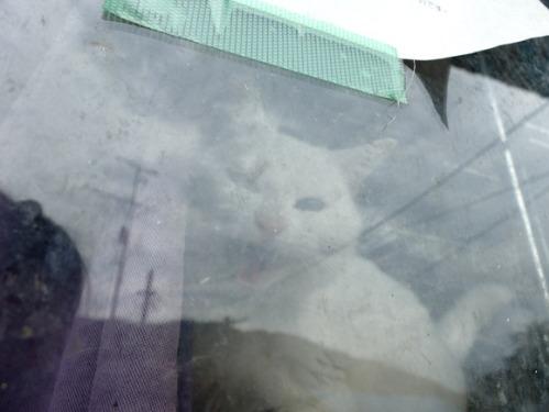 猫日和 2:少しずつ_a0180681_30498.jpg