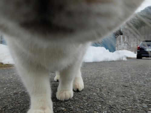 猫日和 2:少しずつ_a0180681_311522.jpg