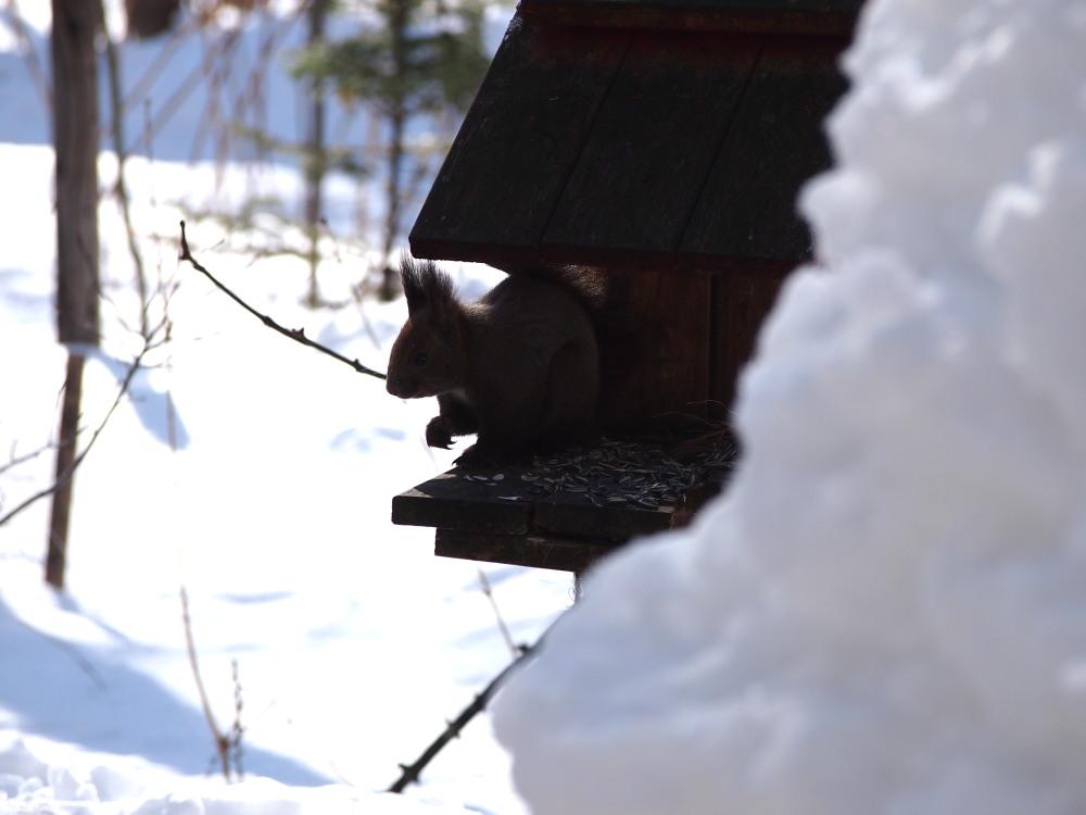 時折雪のちらつくカフェの外は・・エゾリス君や野鳥さんでにぎやかです。_f0276498_11051812.jpg