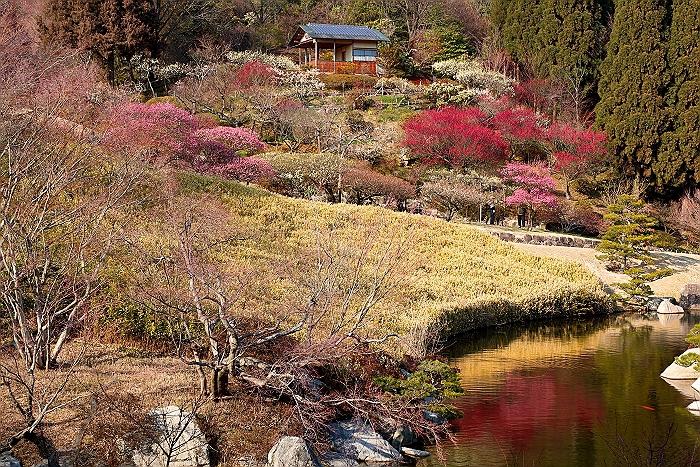 """三原 """"三景園の梅林"""" そのⅡ_a0140608_2134531.jpg"""