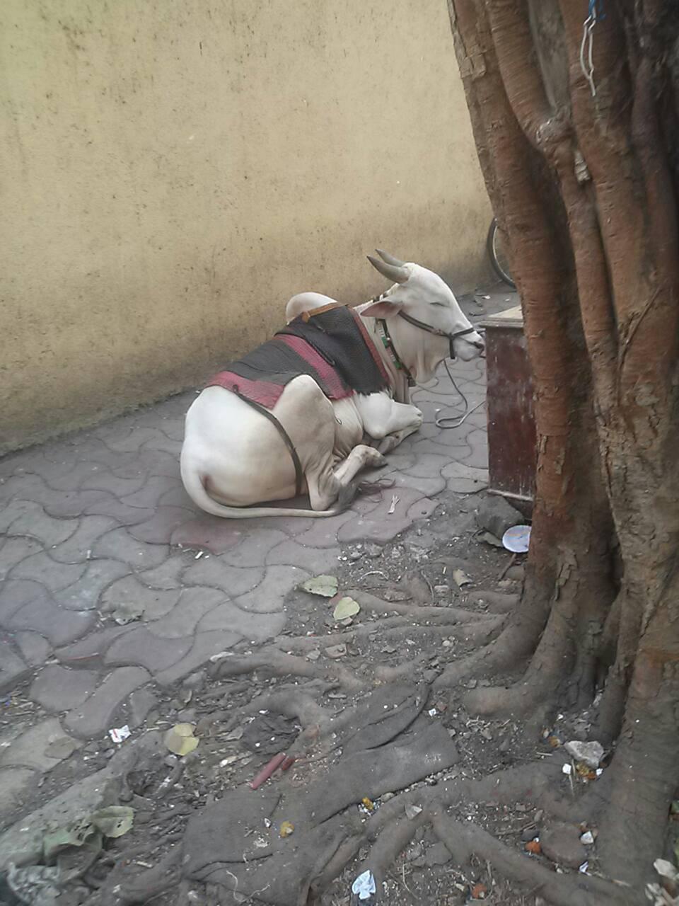 インドというレンズで物事を見せられるということ_e0210611_1311670.jpg