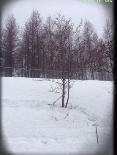まだ冬景色_b0099226_12101482.jpg