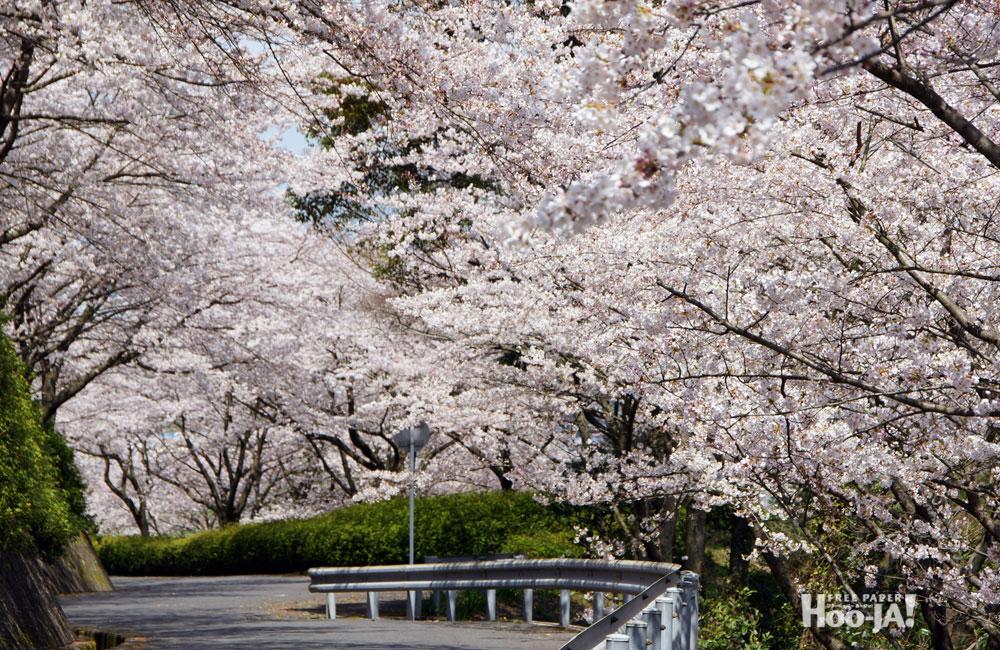 小春日和の日曜日_c0136239_822262.jpg