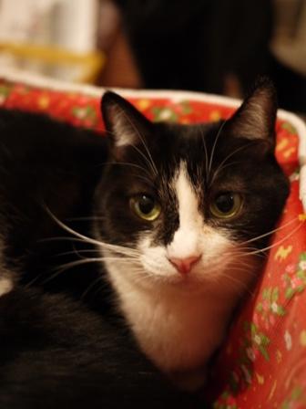 お誕生日猫 らぃら4歳編。_a0143140_0552125.jpg