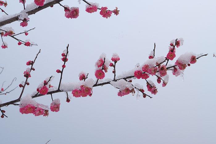 冷たい雪_c0067040_22344032.jpg