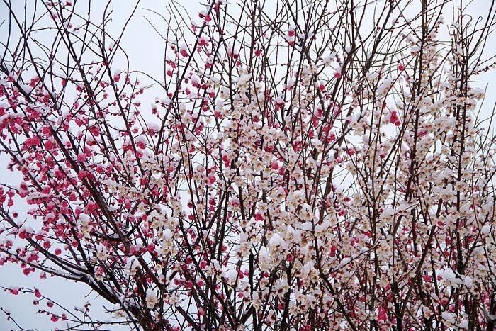 冷たい雪_c0067040_22345383.jpg