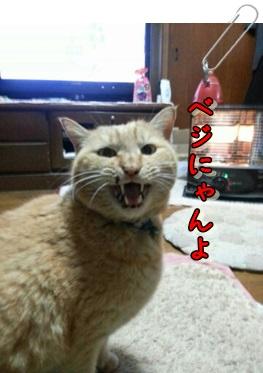 異議あり☆_b0151748_13190108.jpg