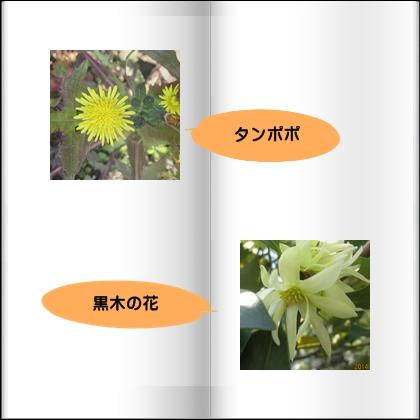 f0087800_6334288.jpg