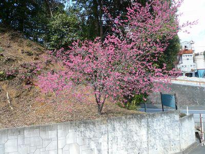 ❀ 素敵な花が咲きました ❀_a0154110_14411210.jpg