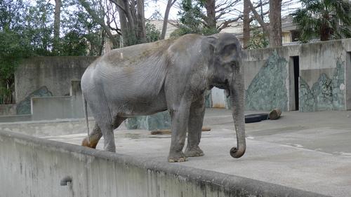 象のはな子のダンス_b0074416_17575341.jpg