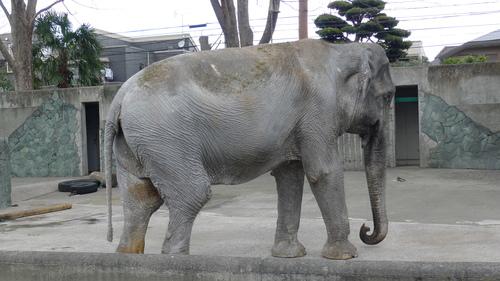 象のはな子のダンス_b0074416_189788.jpg