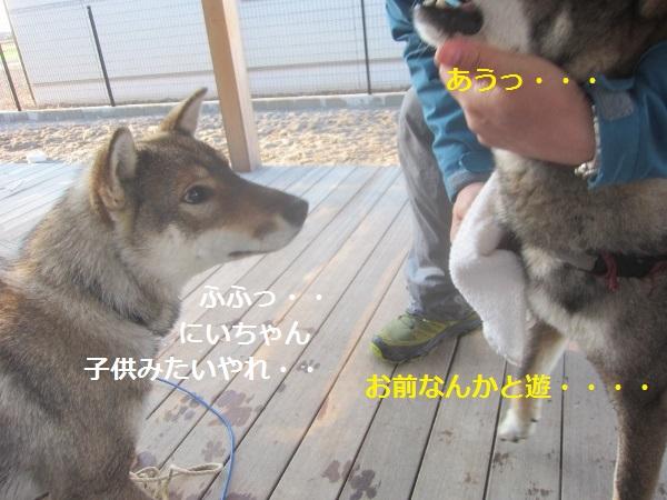 f0143123_1041146.jpg