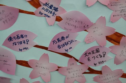 釧路空港あれこれ 3月21日_f0113639_12545154.jpg