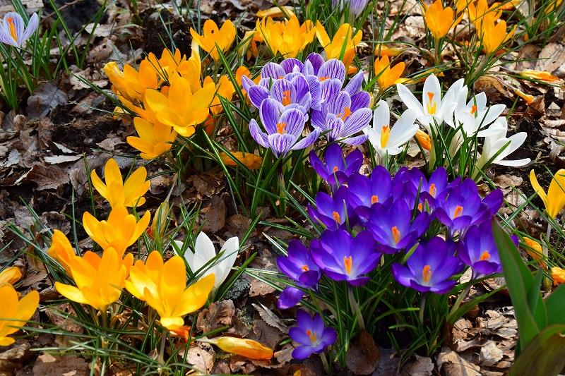 『京都植物園』は春の息吹が。見事な春の花が20140318_e0237645_1353873.jpg