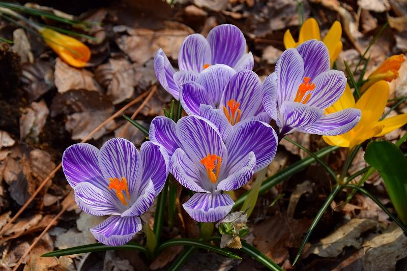 『京都植物園』は春の息吹が。見事な春の花が20140318_e0237645_1364687.jpg