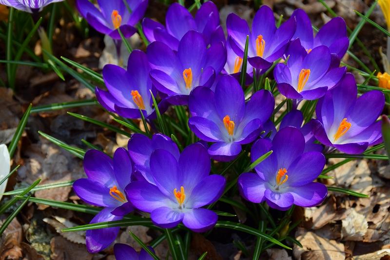 『京都植物園』は春の息吹が。見事な春の花が20140318_e0237645_1365977.jpg