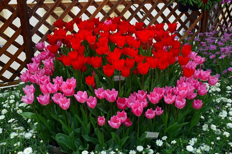 『京都植物園』は春の息吹が。見事な春の花が20140318_e0237645_1382194.jpg
