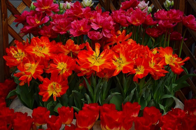 『京都植物園』は春の息吹が。見事な春の花が20140318_e0237645_1384545.jpg