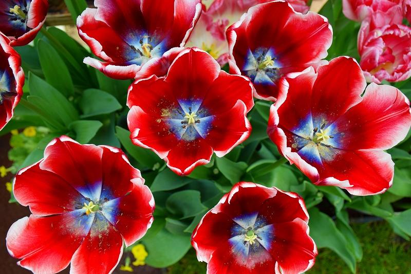 『京都植物園』は春の息吹が。見事な春の花が20140318_e0237645_139279.jpg