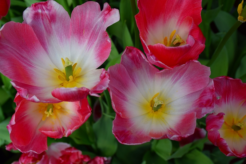 『京都植物園』は春の息吹が。見事な春の花が20140318_e0237645_139497.jpg