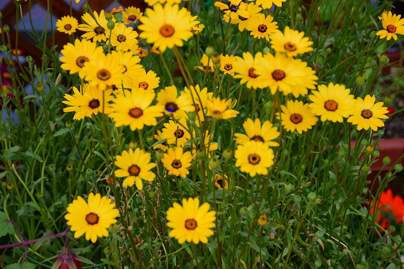 『京都植物園』は春の息吹が。見事な春の花が20140318_e0237645_1402414.jpg