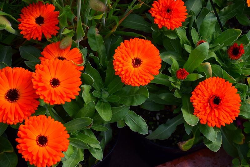 『京都植物園』は春の息吹が。見事な春の花が20140318_e0237645_140456.jpg