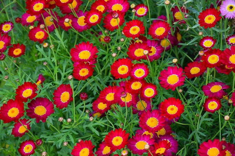 『京都植物園』は春の息吹が。見事な春の花が20140318_e0237645_1404627.jpg