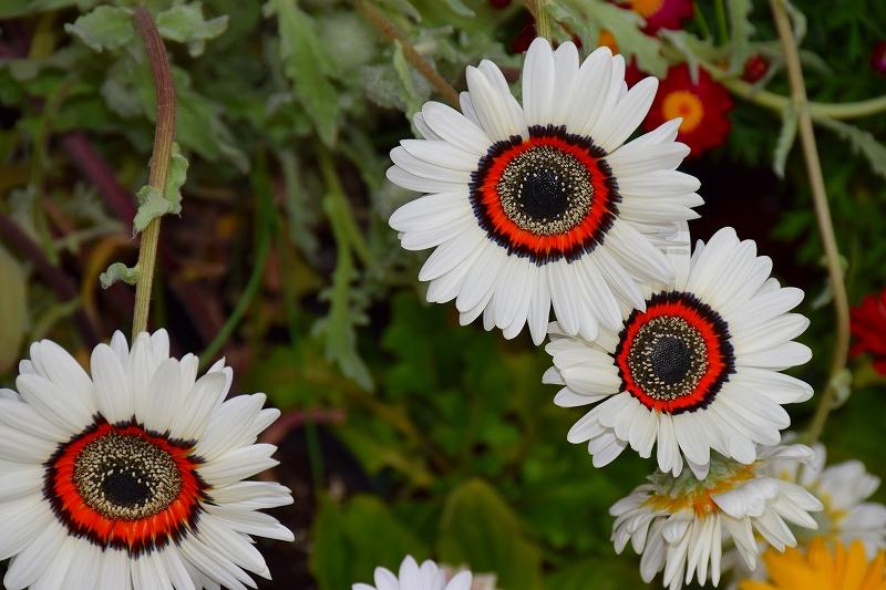 『京都植物園』は春の息吹が。見事な春の花が20140318_e0237645_1412281.jpg
