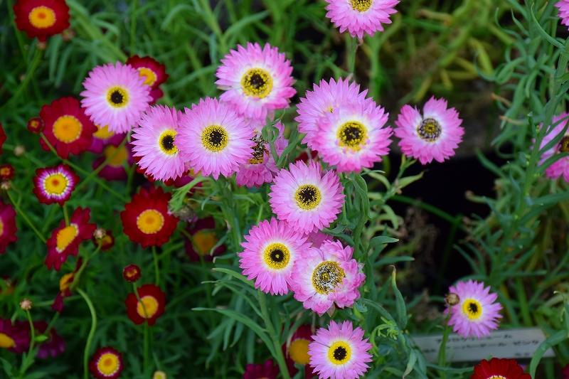 『京都植物園』は春の息吹が。見事な春の花が20140318_e0237645_141424.jpg
